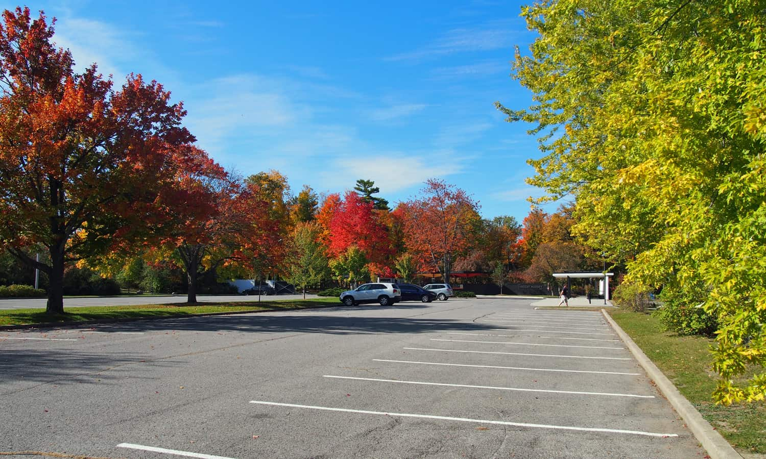 Parking lot with a central row of trees