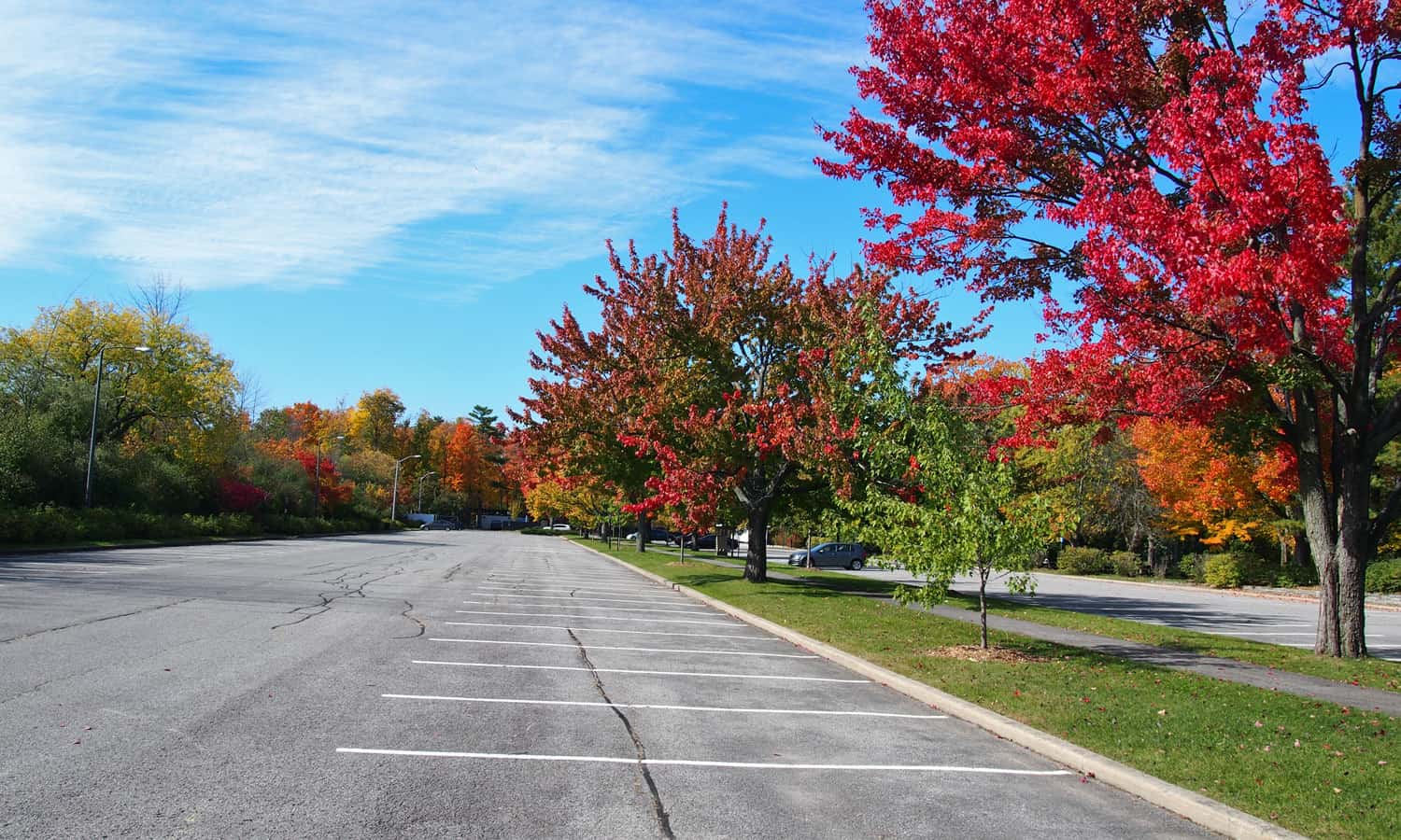 Elongated parking lot with a central row of trees